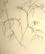 charcoal drawing of a branch
