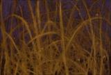 Grasslands Night, 9.5x14, pastel, 2015