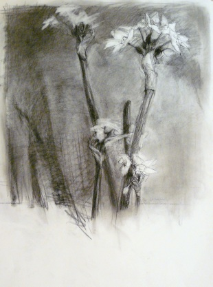 Narcissus II - charcoal