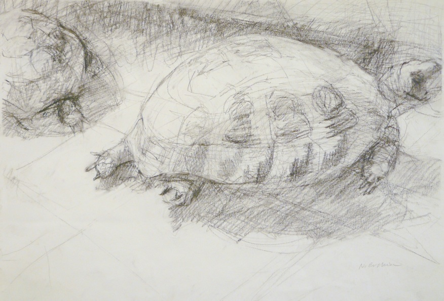 turtles in courtyard- charcoal