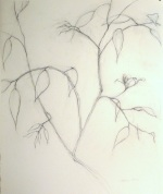 delicate drawing of branches