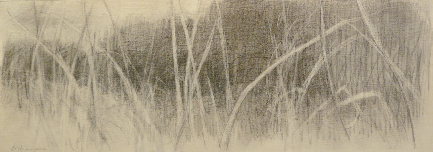 charcoal drawing of gestural branches and a mass of trees behind