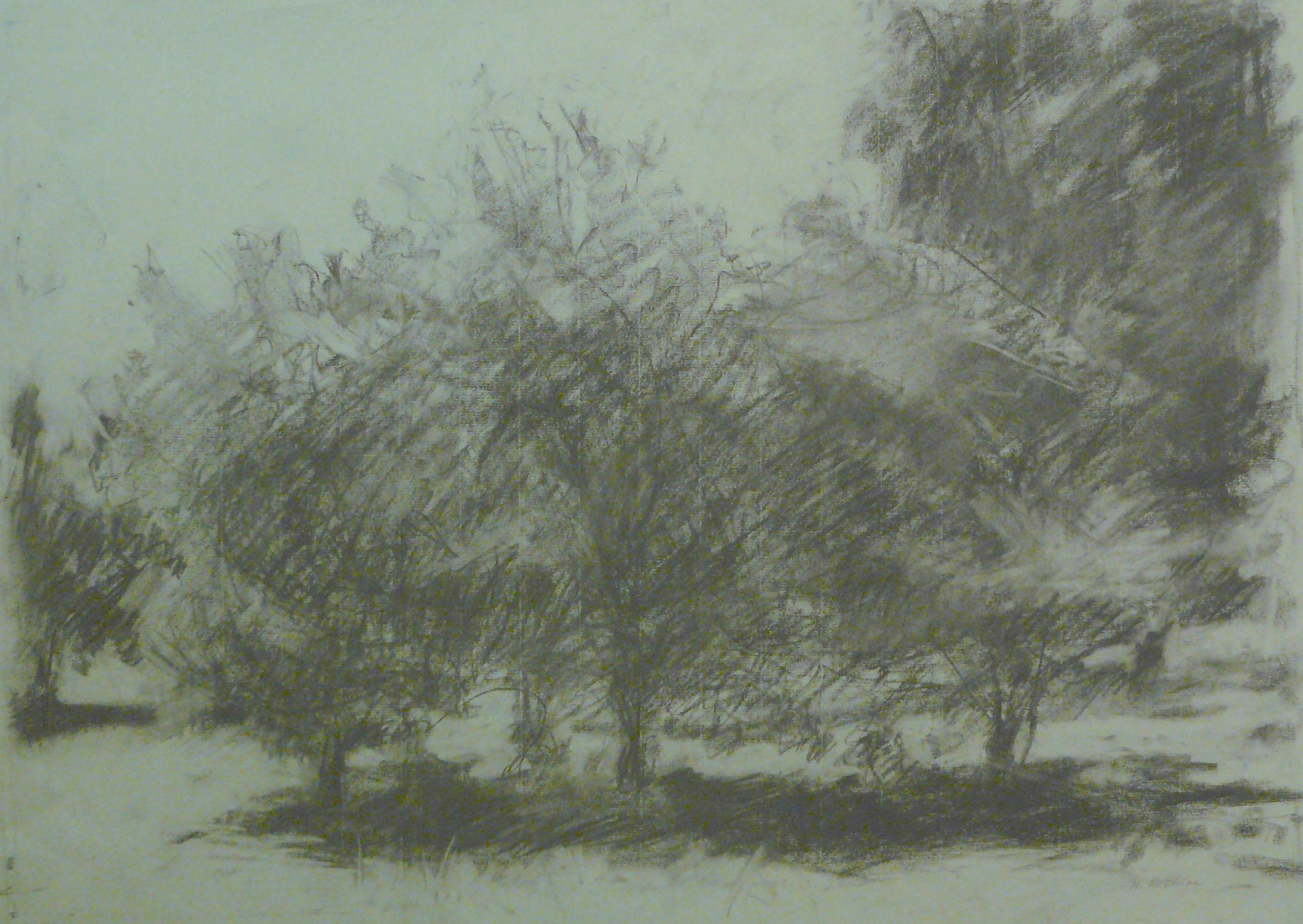 charcoal drawing of apple trees in an orchard on green paper