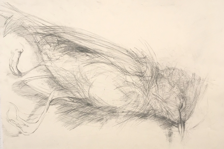 charcoal drawing of a dead bird