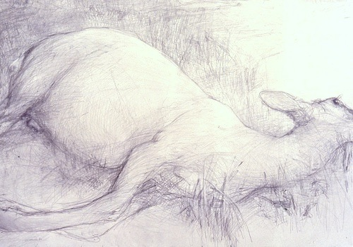 graphite drawing of a dead deer