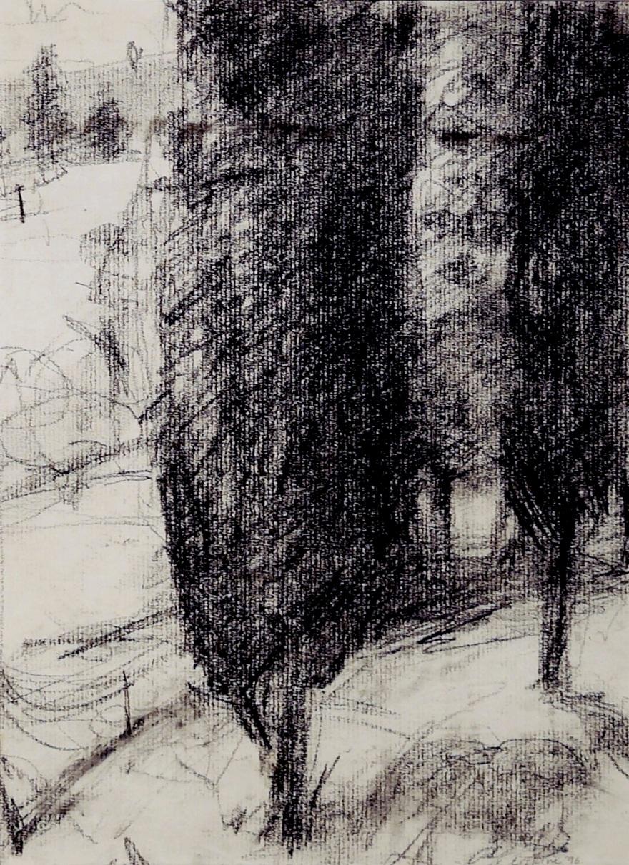 cypress trees on a hillside