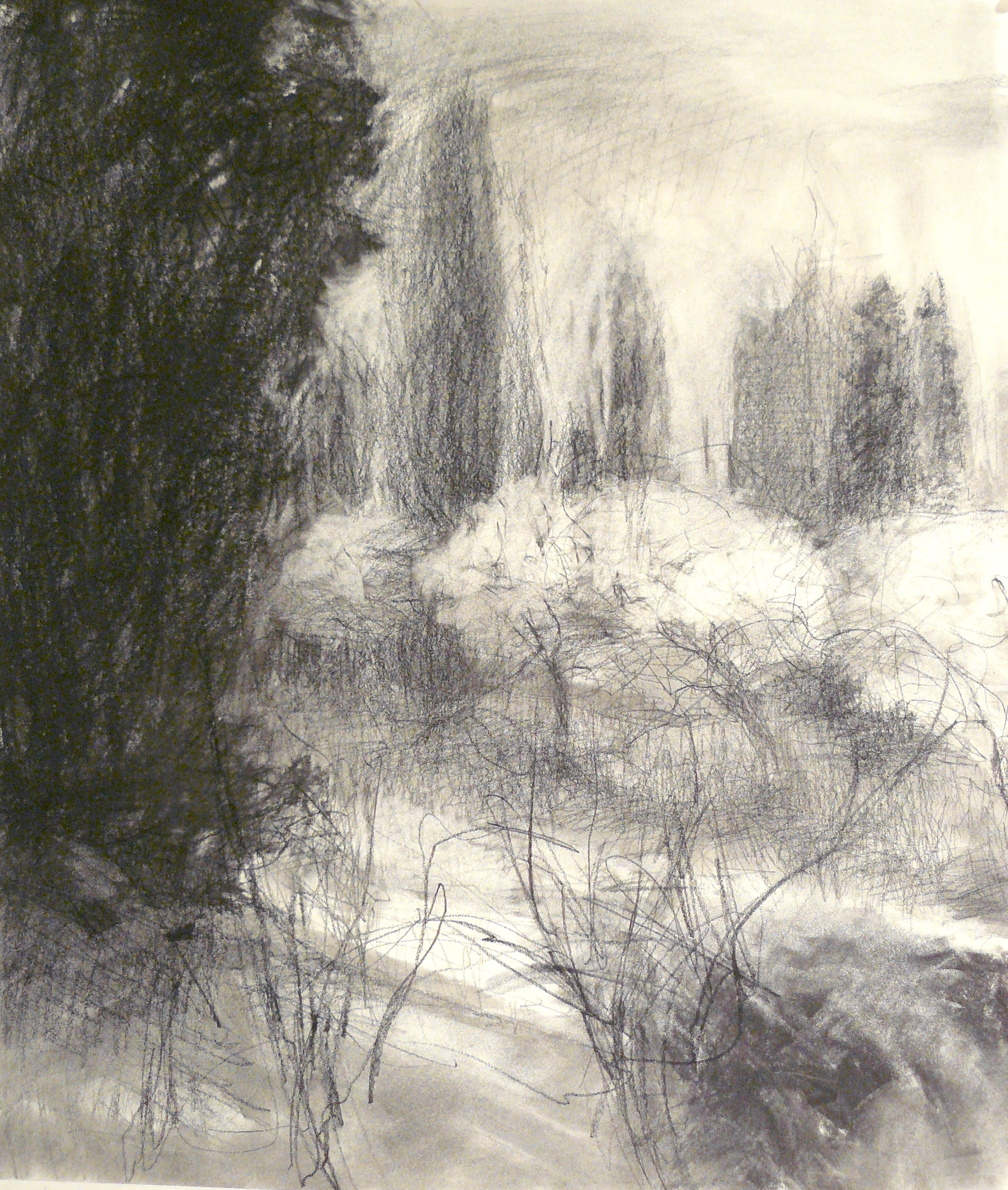 charcoal drawing of olive grove in Italy