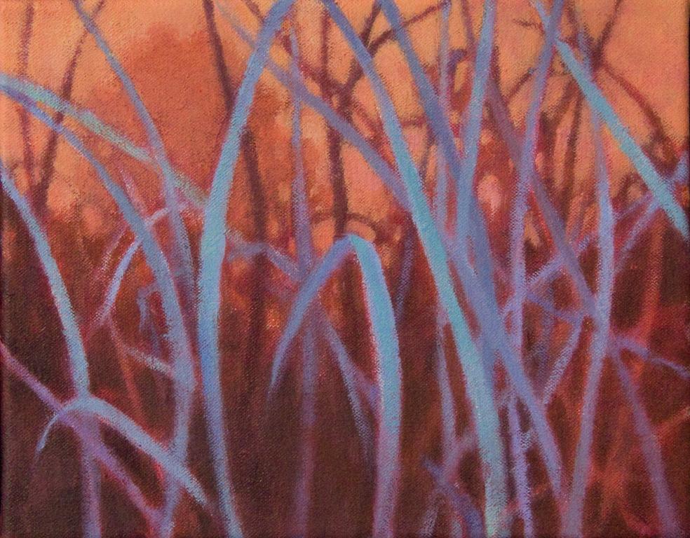grasslands5